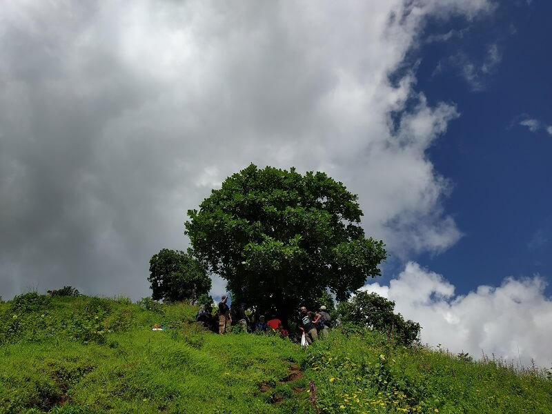 Trekkers resting under a lonely tree before Garbett Plateau